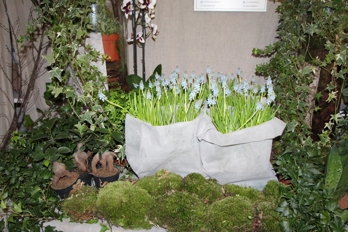 Les tendances 2015 plantes et fleurs for Tendances jardin 2015