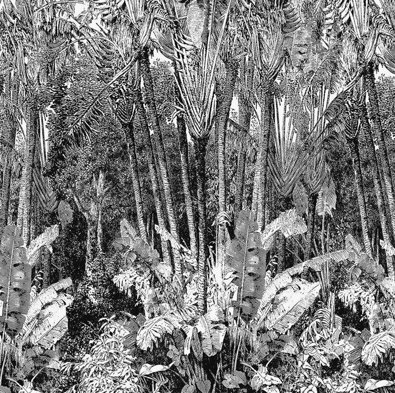 Effet graphique papiers peints jungle en noir blanc - Papier peint blanc et noir ...