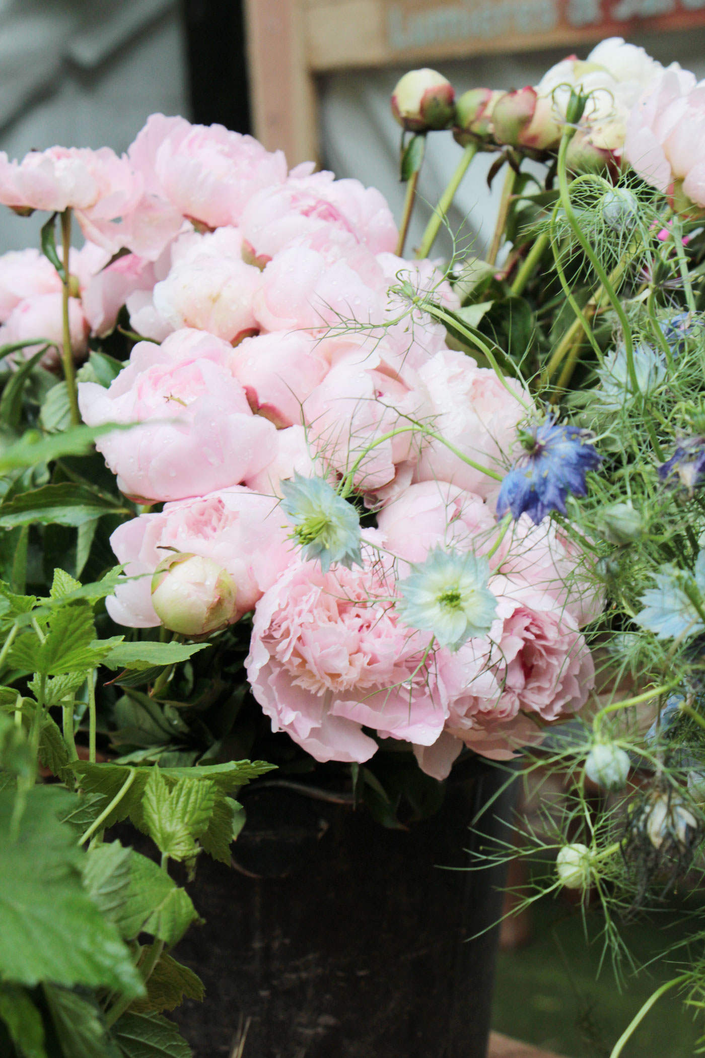 jardins-jardin-stephanie-caumont-pierre-alexandre-risser
