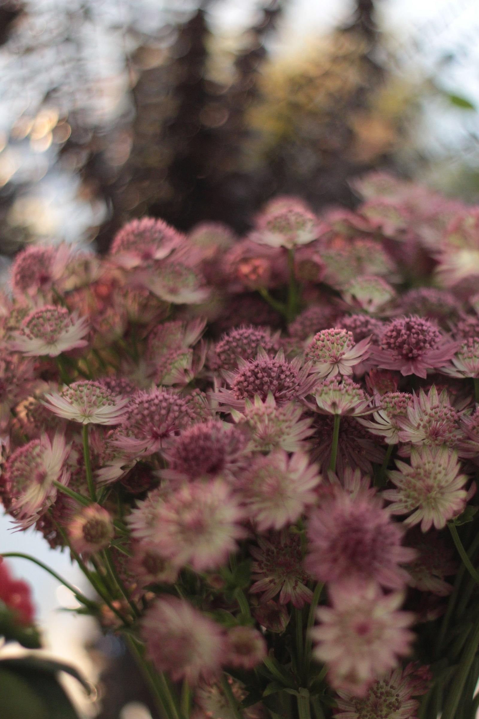 bloom et wild stephanie caumont 3